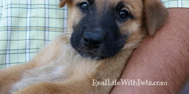 brandy puppy RLWP